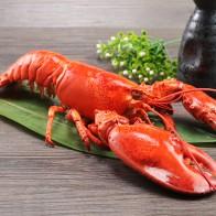 波士顿龙虾 野生龙虾新鲜万博manbetx官网登陆手机版海虾
